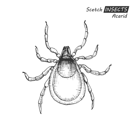 lyme disease: Hand drawn acarid Illustration