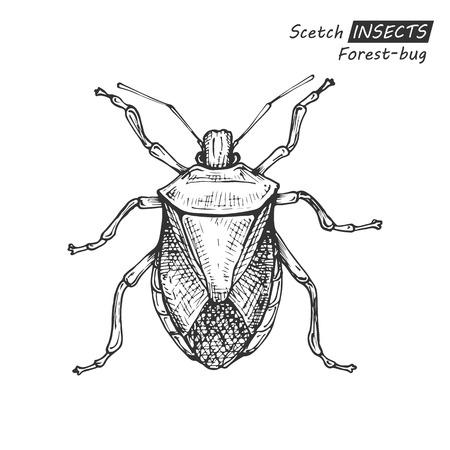 Hand drawn forest-bug.