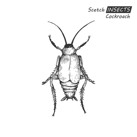 disgusting animal: Hand drawn cockroach.
