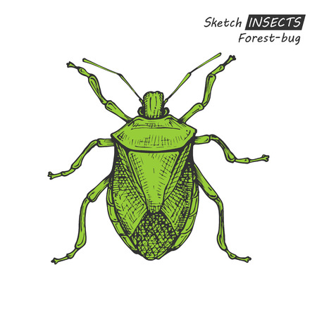 ladybird: Hand drawn ink sketch of forest-bug isolated on white background. Vector illustration. Drawing in vintage style. Illustration