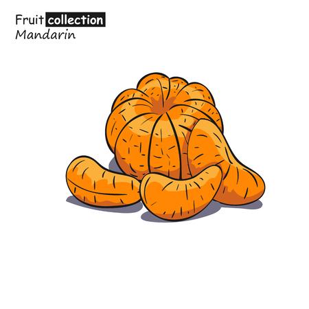 Vector illustration of mandarin in sketch style.