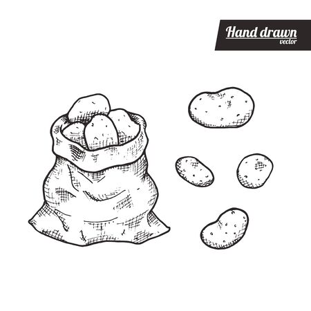Hand drawn sketch style of potato. Vintage eco food vector illustration. Bag of potatos and isolated potato. White background.