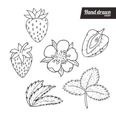 Hand drawn sketch style of strawberry set