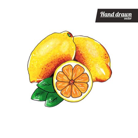 Hand drawn sketch style of colored lemon Vettoriali