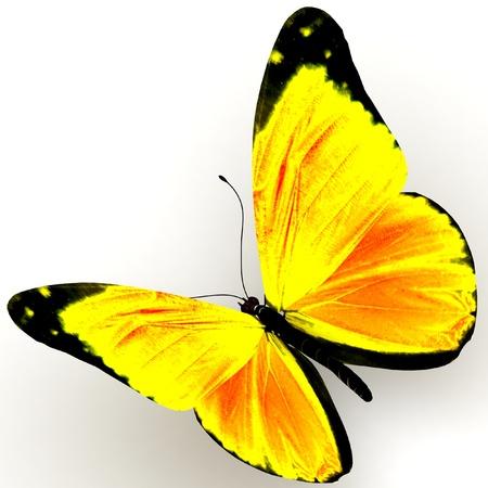 mariposa azul: Butterfly close up aislado sobre fondo blanco