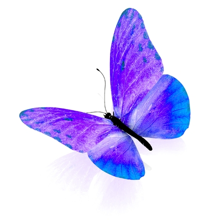eyespot: Butterfly. Isolated on white background. 3D render.