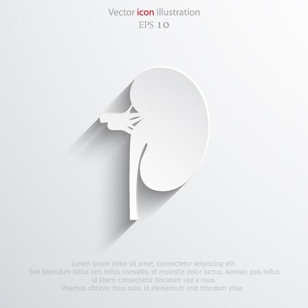 Vector flat kidney icon