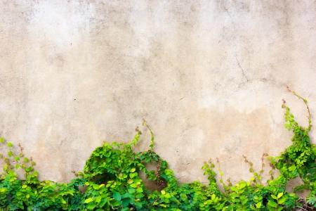 Ivy on the walls amusement park.