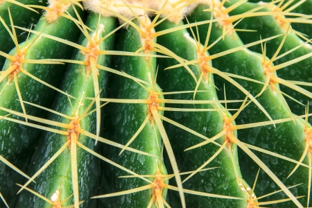 leather cactus make feel sharp on sand photo