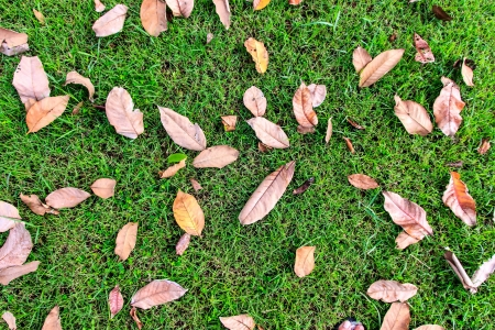 gass:  Leaves  dry on gass in garden and wait for destroy