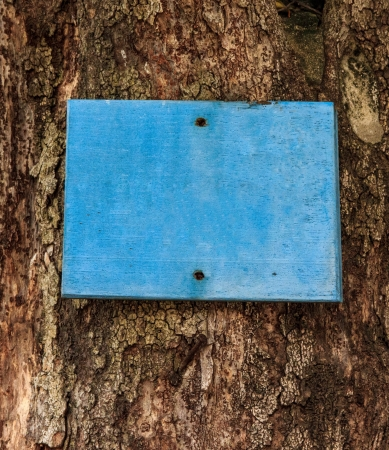 finger-post on tree make by wood paint blue.