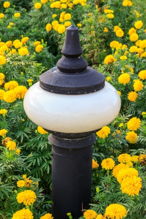 Focus on lamp on flower marigold in park Stock Photo - 17177322