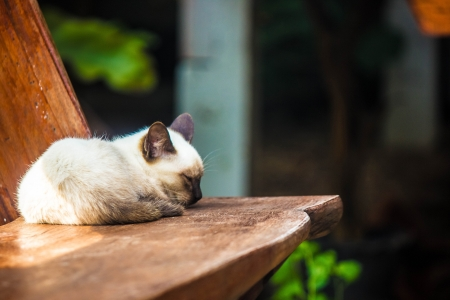 Focus on rose cat lay on wooden chair. Stock Photo - 17603354
