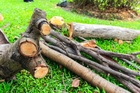 split up: A piece of wood on gass in garden  Stock Photo