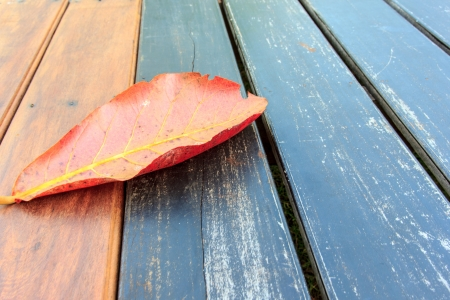 Leaf dry alone on floor wood it have red cloour. photo