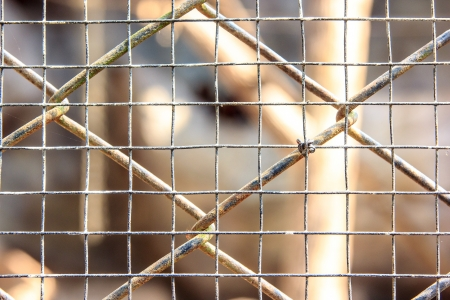 Cage net in zoo for coop animals photo