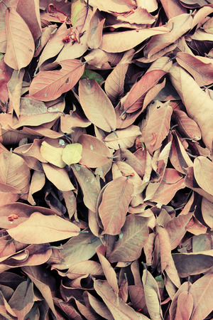 oversee: The dried leaves were brought together to oversee the destruction. process vintage style