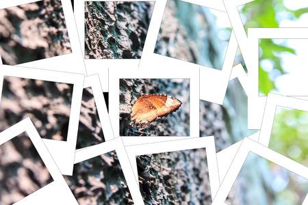 It name  Black Kaiser Family Nymphalidae sub Family Satyrinae and Species Penthema binghami process instant photo  style Stock Photo
