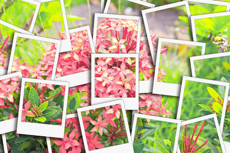 Ixora it have red and white use the herbs process instant photo style