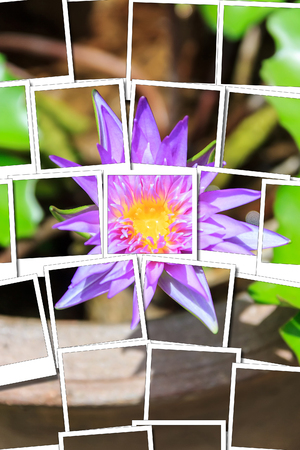 Lotus pink on pot on the sun process instant photo style Stock Photo