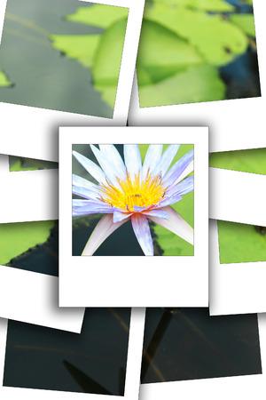 Lotus white on pot on the sun process instant photo styhle