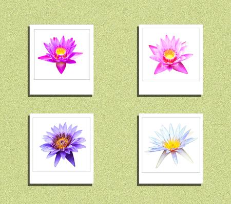 Lotus on isolate process instant photo style Stock Photo