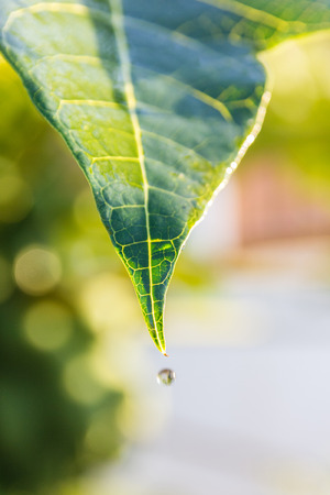 leaf wet and drop water on day time Stock Photo
