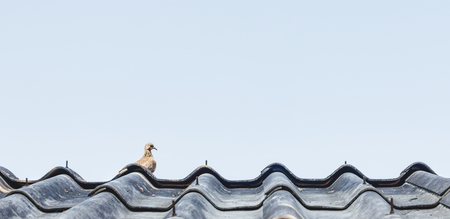 A bird on old roof in day time