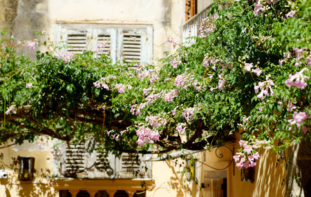 a cozy house, windows with shutters and flowers in Tropea Calabria Italy