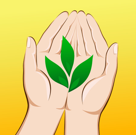 hand holding plant: The creation of new life. The hand holding the young green plant. Illustration