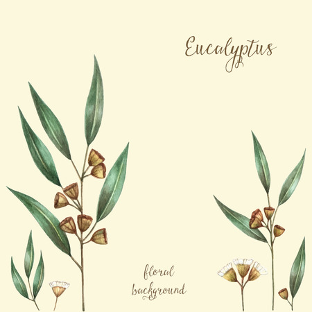 Watercolor eucalyptus leaves and branches. Vector illustration.