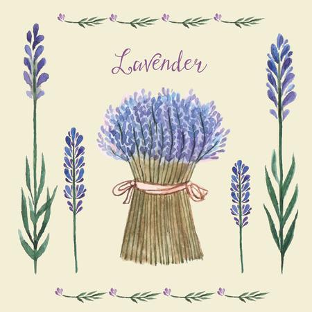 fiori di lavanda: Illustrazione vettoriale di una illustrazione lavanda Background.Watercolor per biglietti di auguri, inviti.