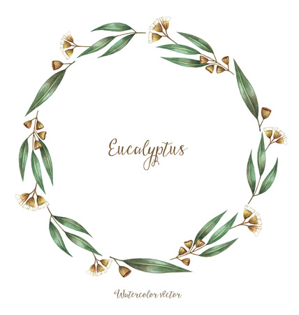eucalyptus: Watercolor, decorative elements, round frame of eucalyptus. Vector illustration.   Place for your text.