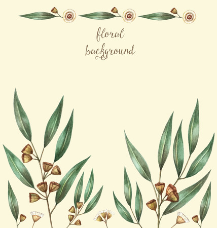 gum: Watercolor eucalyptus leaves and branches. Vector illustration.