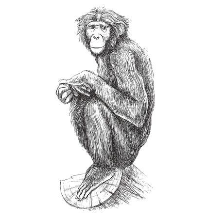 Hand drawn monkey sitting on the tree. Vector illustration. Illustration