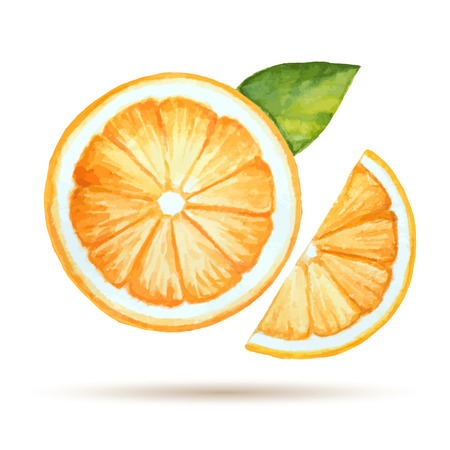 Watercolor orange  isolated on white background. Vector illustration.