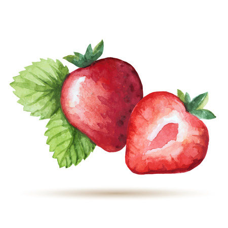 Watercolor strawberry isolated on white background. Vector illustration.