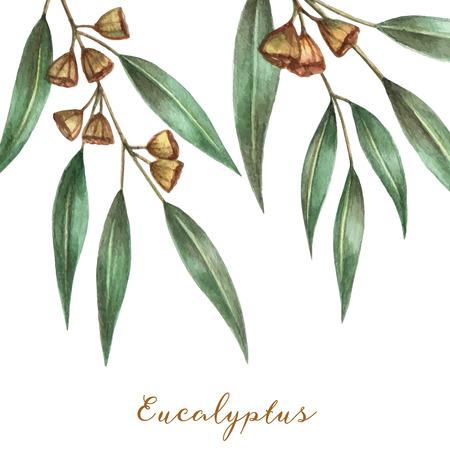 Aquarel eucalyptus bladeren en takken. Vector illustratie.