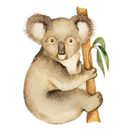 koala: Koala, watercolor vector illustration isolated on white background.