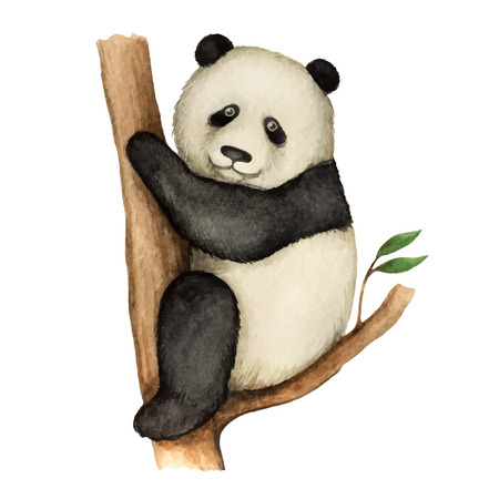 baby animals: Panda, watercolor vector illustration isolated on white background.