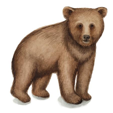 갈색 곰, 수채화 벡터 일러스트 레이 션입니다. 흰색 배경에 고립.