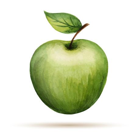 Aquarell Apfel, Vektor-Illustration isoliert auf weißem Hintergrund., Vektor-Illustration isoliert auf weißem Hintergrund.