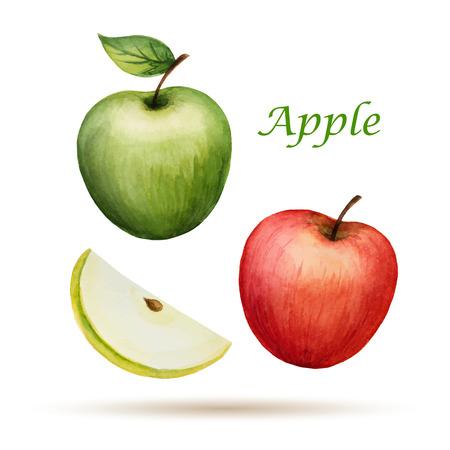 Aquarel Apple, vector illustratie geïsoleerd op een witte achtergrond.