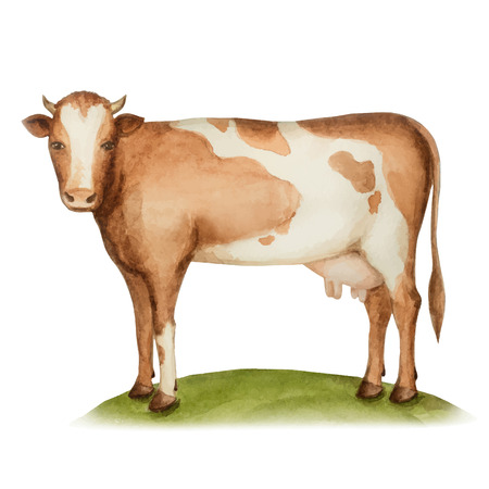 dairy cow: Agricultural animal, a cow standing on a green meadow, watercolor, vector illustration.