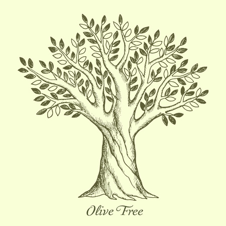 Olive tree silhouette. Sketch wood, vector illustration.