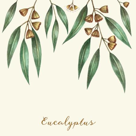 水彩ユーカリの葉や枝。ベクトル イラスト。 写真素材 - 37155201