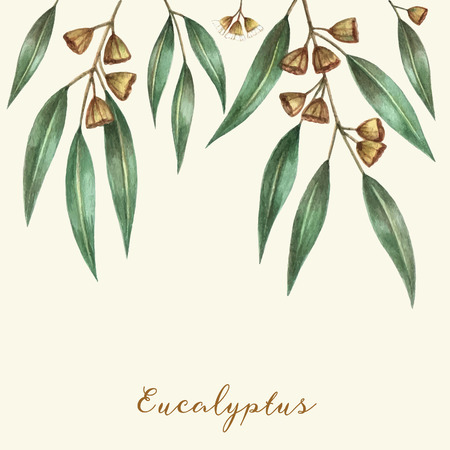 gums: Watercolor eucalyptus leaves and branches. Vector illustration.
