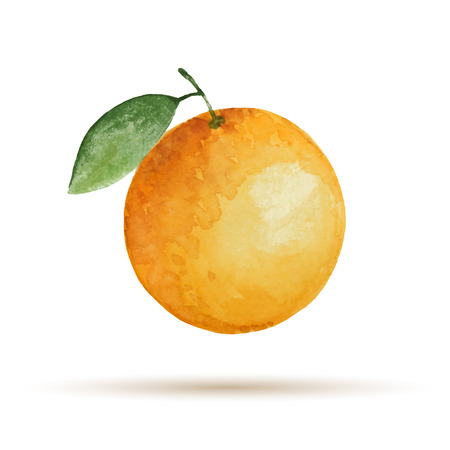Orange hand drawn watercolor, on a white background. Vector illustration.