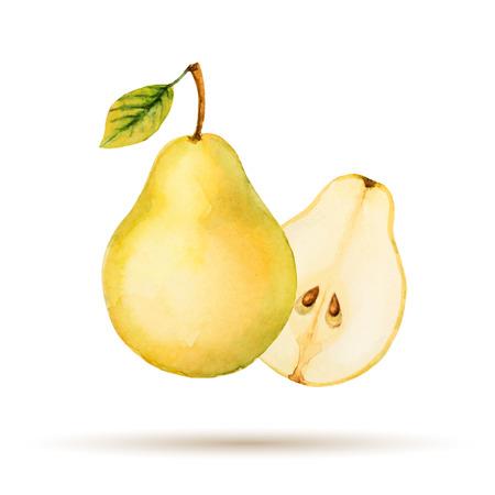 Pear 手描き水彩白い背景  イラスト・ベクター素材