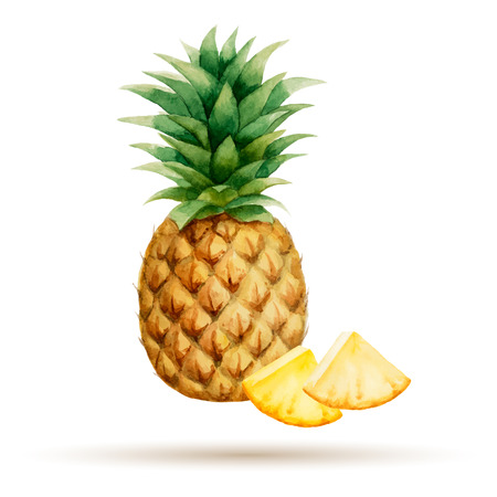 Pineapple and cloves hand drawn watercolor on a white background Illustration